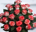 red white roses 25 set compressor 700x700 - Свято-Троицкая Александро-Невская Лавра