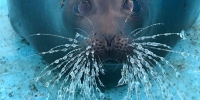 vk.com/sealrescue - Moika78.Ru